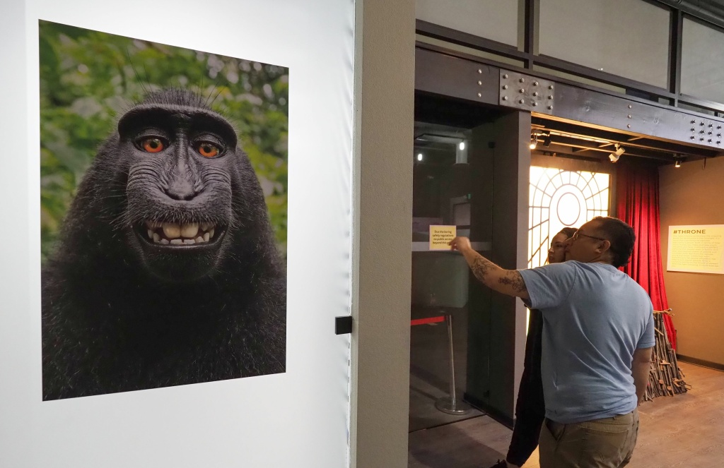 The viral selfie taken by a maque monkey using the smart phone of nature photographer David J. Slater and which became the subject of a complicated copyright lawsuit is displayed at the Museum of Selfies, in Glendale on March 29, 2018.