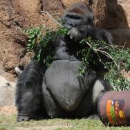 Donkey Kong Zoo