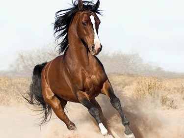 Image used as an avatar for the horse_ebooks Twitter account.