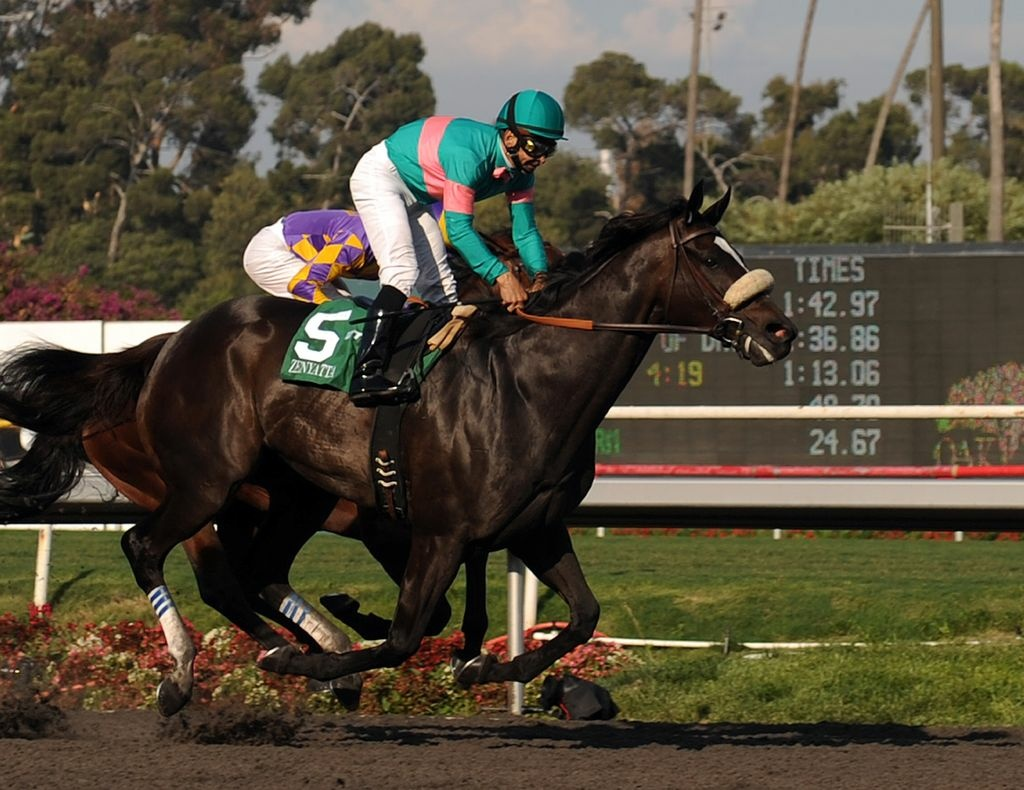 Zenyatta with jockey Mike Smith aboard, wins the Grade I $250,000 Lady's Secret Stakes horse race, October 2, 2010, at Oak Tree at Hollywood Park, in Inglewood, California.