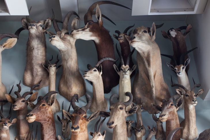 Natural History Museum Taxidermy