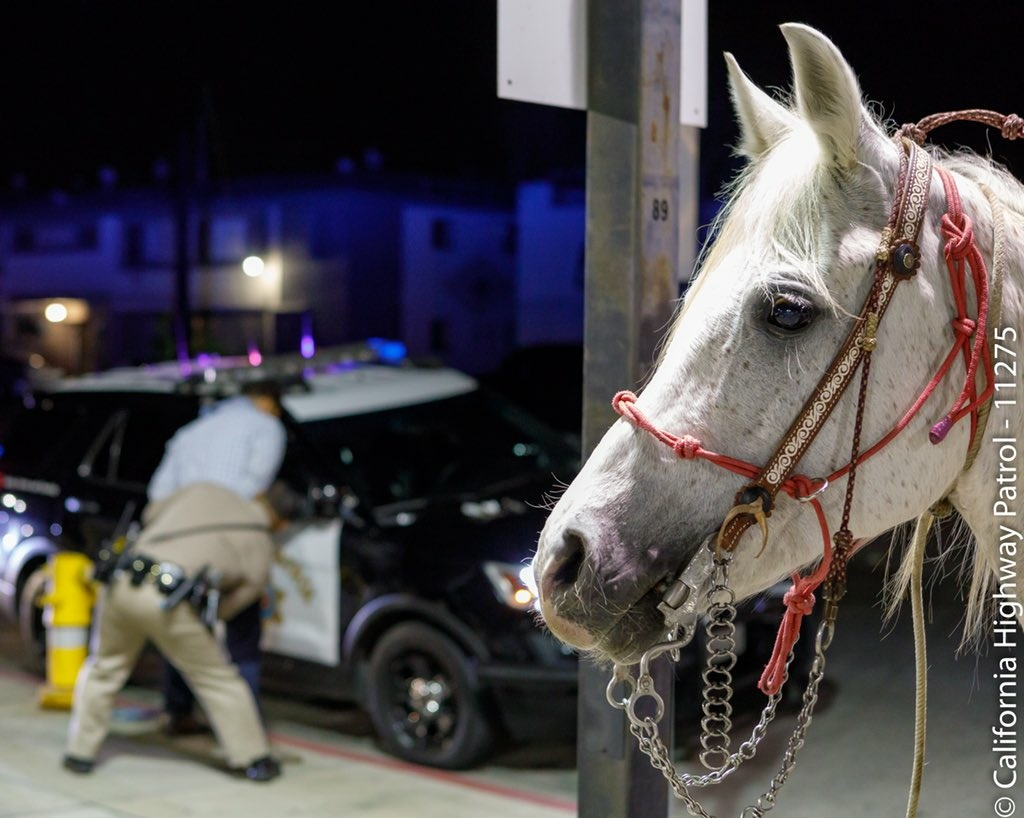 A man is arrested on Saturday, February 24, 2018, after he was spotted riding a horse on the 91 freeway in Long Beach.