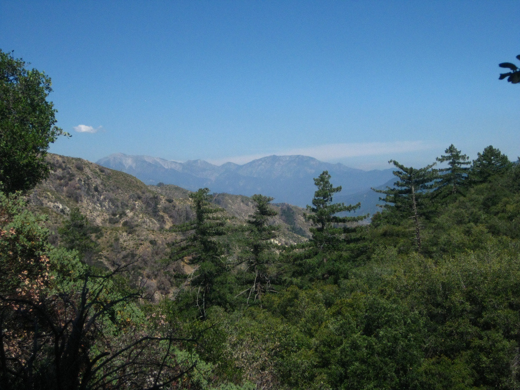 Angeles National Forest.