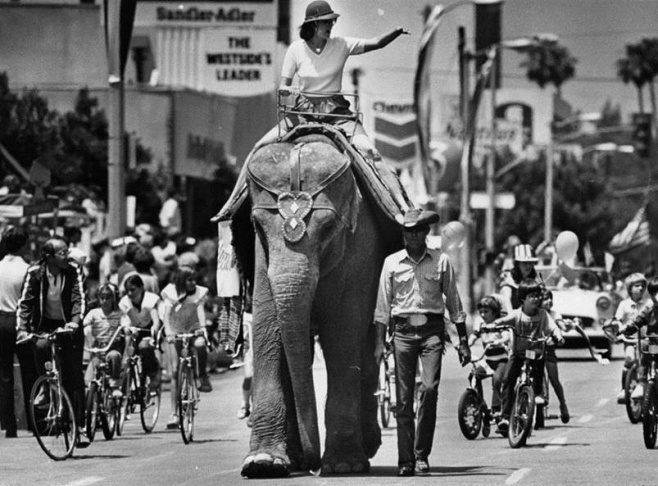 The 10th annual Brentwood Parade started after the 5K and 10K morning runs. The parade which ran down San Vicente Boulevard, featured rare animals and rare entertainers all in a row on May 24, 1985.