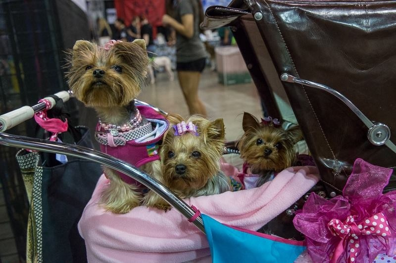 File: Dogs at the Southern California Pet Expo.