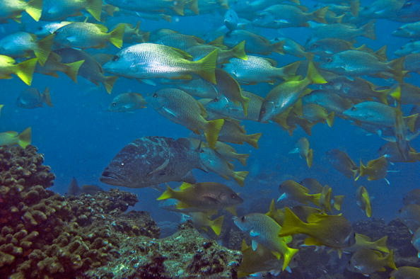 Fish are seen at Cabo Pulmo National Mar