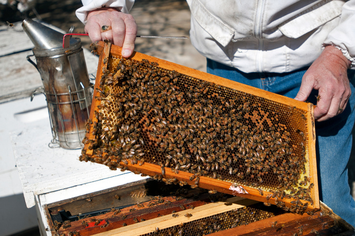 New report on health of honeybees