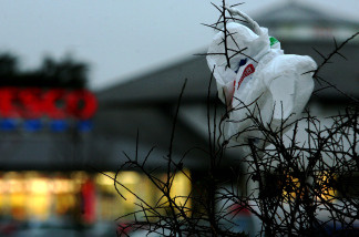 Plastic bags have not been banned in the state, but many California cities are pushing forward to ban them