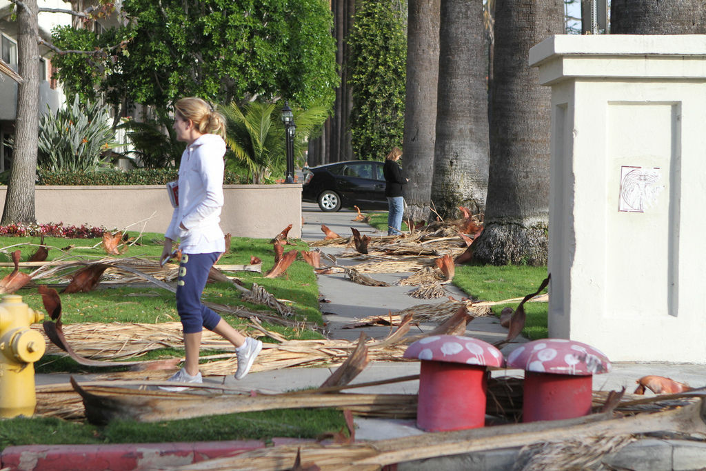 Palm tree fronds litter a street in Los Feliz in the wake of strong winds two weeks ago. High winds returned today.
