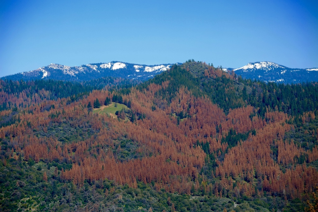 Tree mortality is at its worst since aerial surveys began in 2001, according to scientists. Photo by Steve Dunsky, courtesy of US Forest Service.