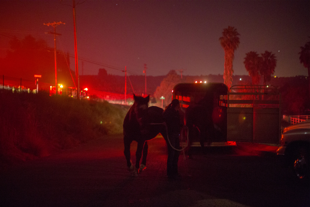Horses that survived the Lilac Fire in their stalls are loaded onto a trailer in the early morning hours of December 8, 2017 near Bonsall, California.