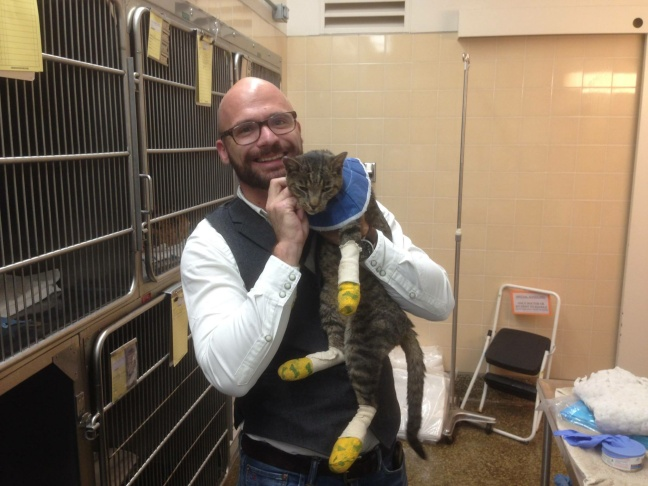 A cat recovers after being rescued from the Butte Fire, September 2015.