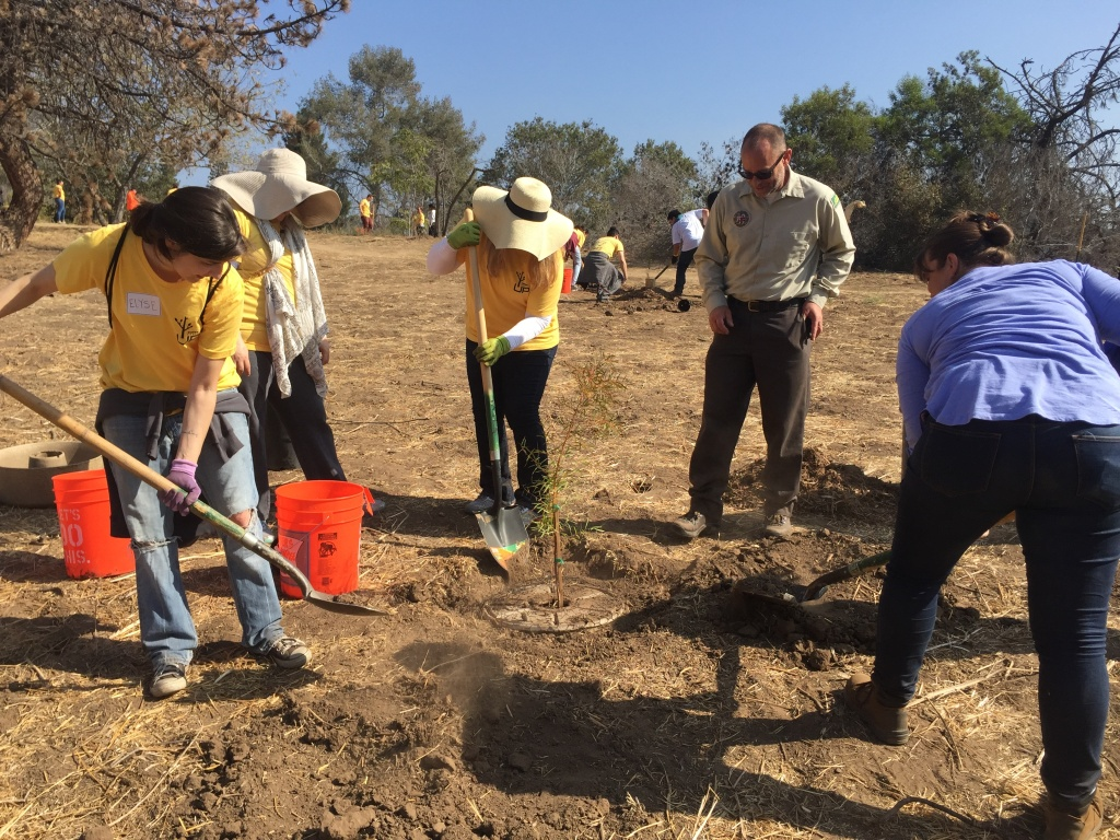 Ranger Leon Boroditsky watches as volunteers help plant new trees at Elysian Park on Saturday.