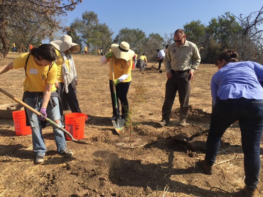 Ranger Leon Boroditsky watches as volunteers help plant new trees at Elysian Park on Saturday.