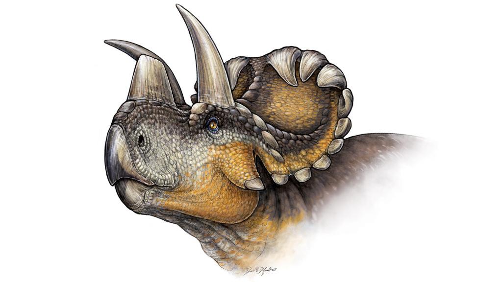 Life reconstruction of Wendiceratops pinhorn.