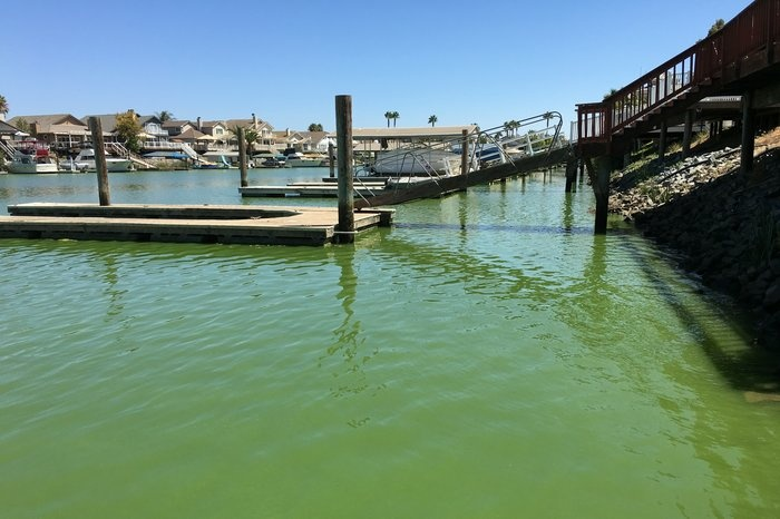 The docks behind homes at Discovery Bay, Calif., are quieter than usual because of fears of blue green algae toxins.