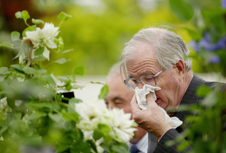 A man covers his face while sneezing near one of the garden show pieces at the Chelsea Flower Show in London 24 May 2004
