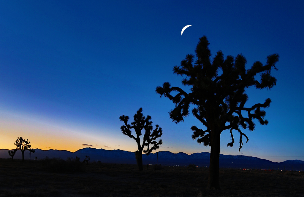Moon over Joshua Trees.