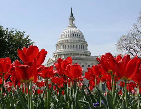 The dome of the U.S. Capitol provides a backdrop for blooming tulips April 25, 2007 on Capitol Hill in Washington, D.C.