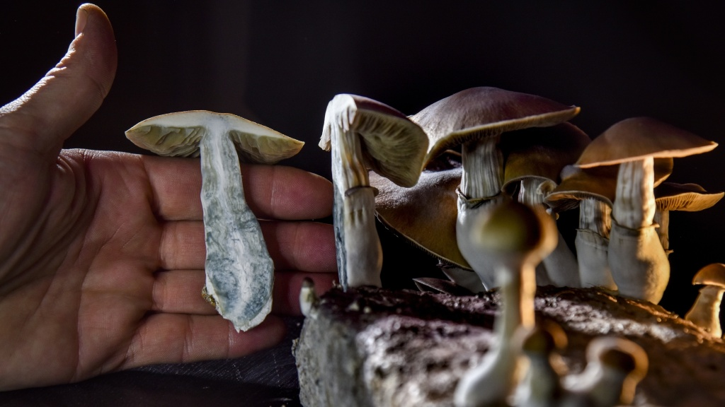 A Washington, D.C., resident has an operation growing psilocybin mushrooms. With the legalization of marijuana, advocates in several states, including Oregon, have pushed for the legalization of other drugs such as