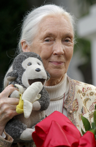 Chimpanzee expert Jane Goodall holds a football after being named as the grand marshal of Pasadena's 2013 Rose Parade in Pasadena, Calif. on Wed. April 25, 2012. The Tournament of Roses announced the honor Wednesday in a ceremony where Goodall greeted well-wishers with the kind of chimpanzee call that can be heard in Tanzania's Gombe National Park.