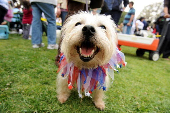 To dogs, July 4th fireworks truly are bombs bursting in air.