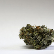 A marijuana bud is seen at a medical marijuana facility in Unity, Maine.