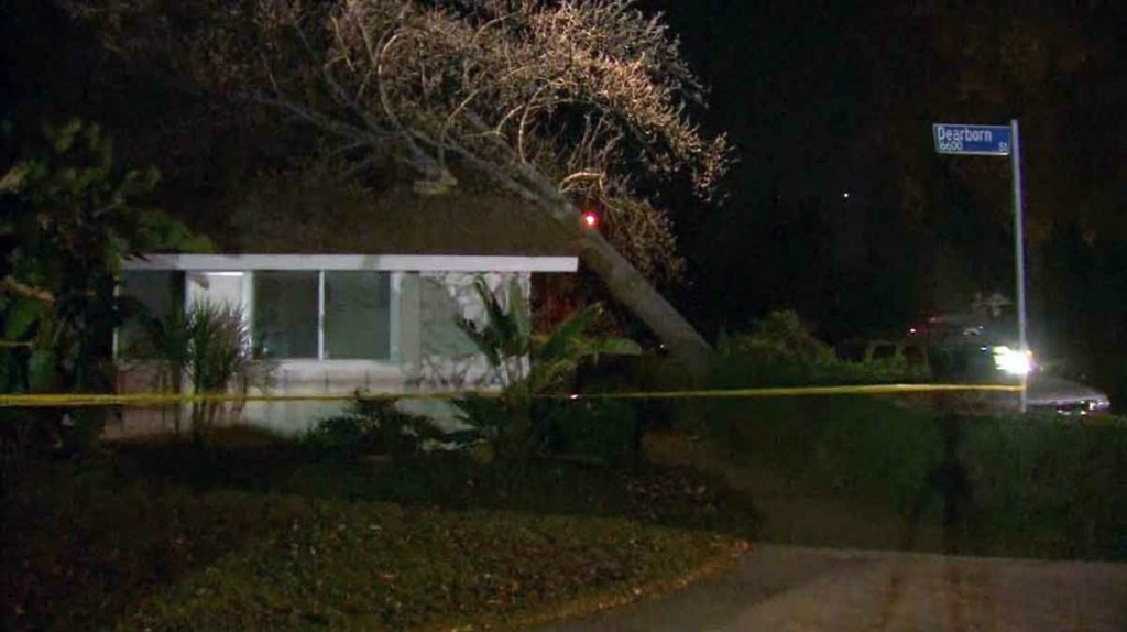 Strong gusts toppled trees in South Los Angeles and the San Fernando Valley, and knocked out power to hundreds early Thursday, October 29, 2015.