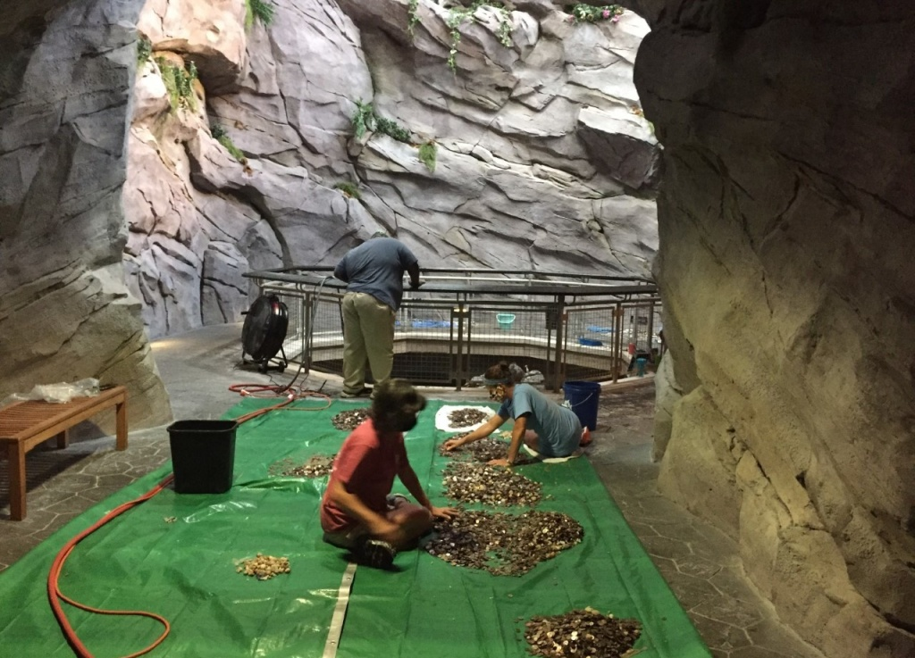 Staff at the North Carolina Aquarium at Pine Knoll Shores turned off a 30-foot waterfall and collected all the coins visitors had thrown into the water while making wishes. After cleaning them off, they'll put the money toward the aquarium's expenses.