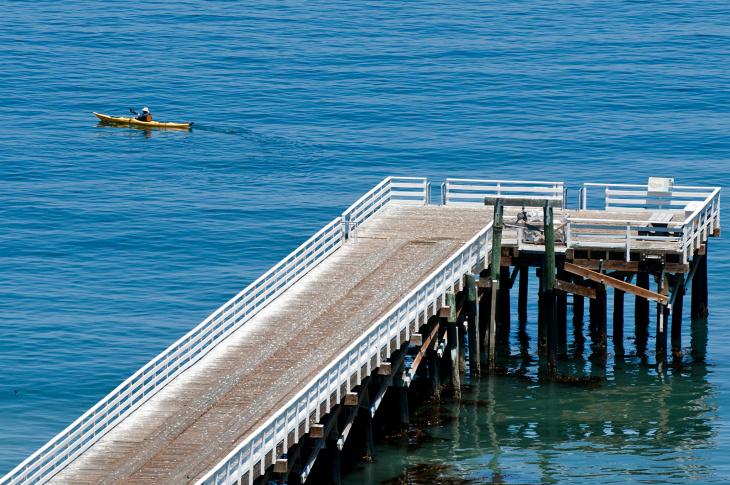 Santa Cruz Island Fox Recovery - 11