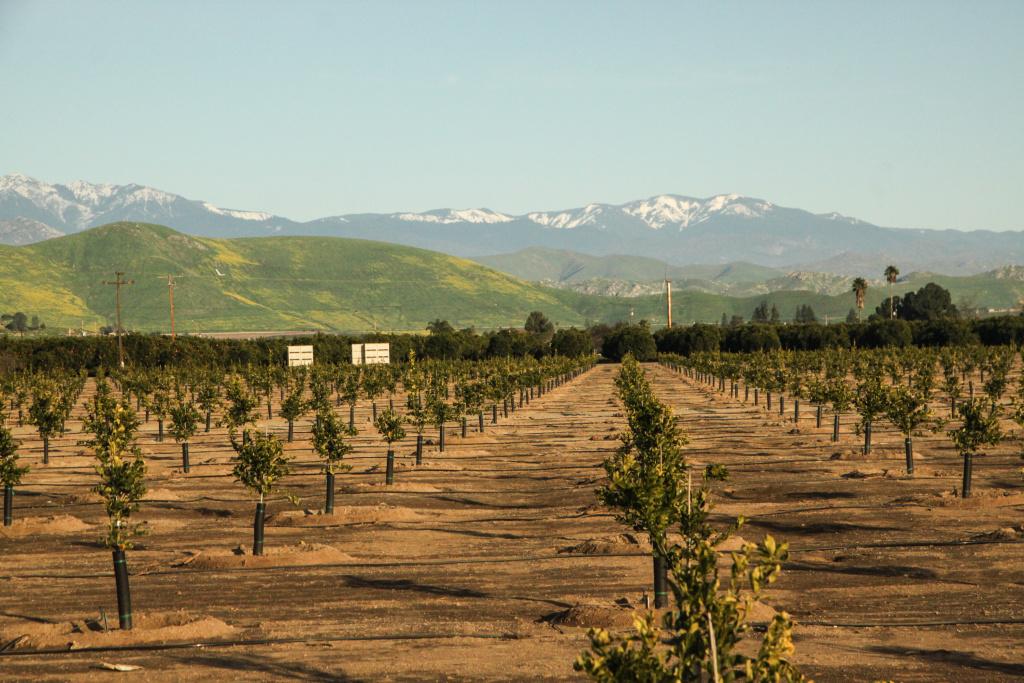 Lindsay, California is a town of about 12,000 in the heart of the state's citrus farming belt in Tulare County.