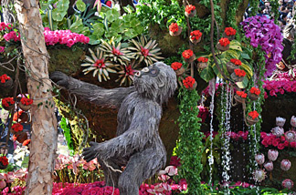 "Rain Bird Corporation's ""Mountaintop Majesty"" 2010 Rose Parade float features an African rain forest, complete with 9 Mountain Gorillas made of Pharmitas grass, Spanish moss and black lichen."