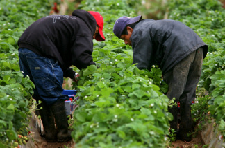 Only a third of California's farm workers have a high school diploma or higher. Project Avanzando hopes to change that.