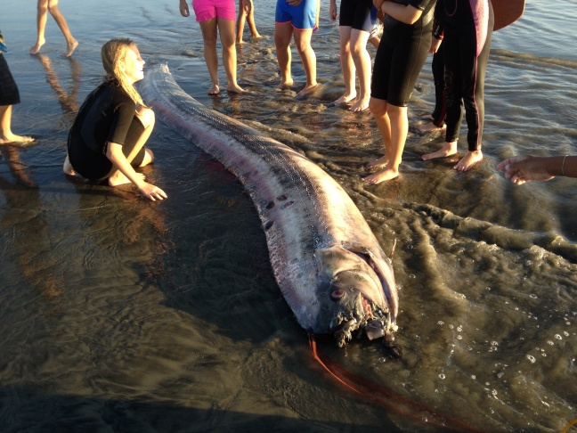The 14-foot fish had to be broken into pieces in order to be moved from the Oceanside beach it landed on.