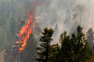 A tree burns during the Las Conchas fire near Los Alamos, N.M., Wednesday, June 29, 2011.