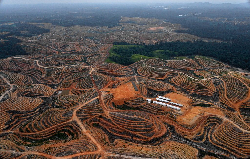 Deforested land on Indonesia's Borneo Island. Activists are using satellites to monitor deforestation, but cloud cover sometimes hides it from view.
