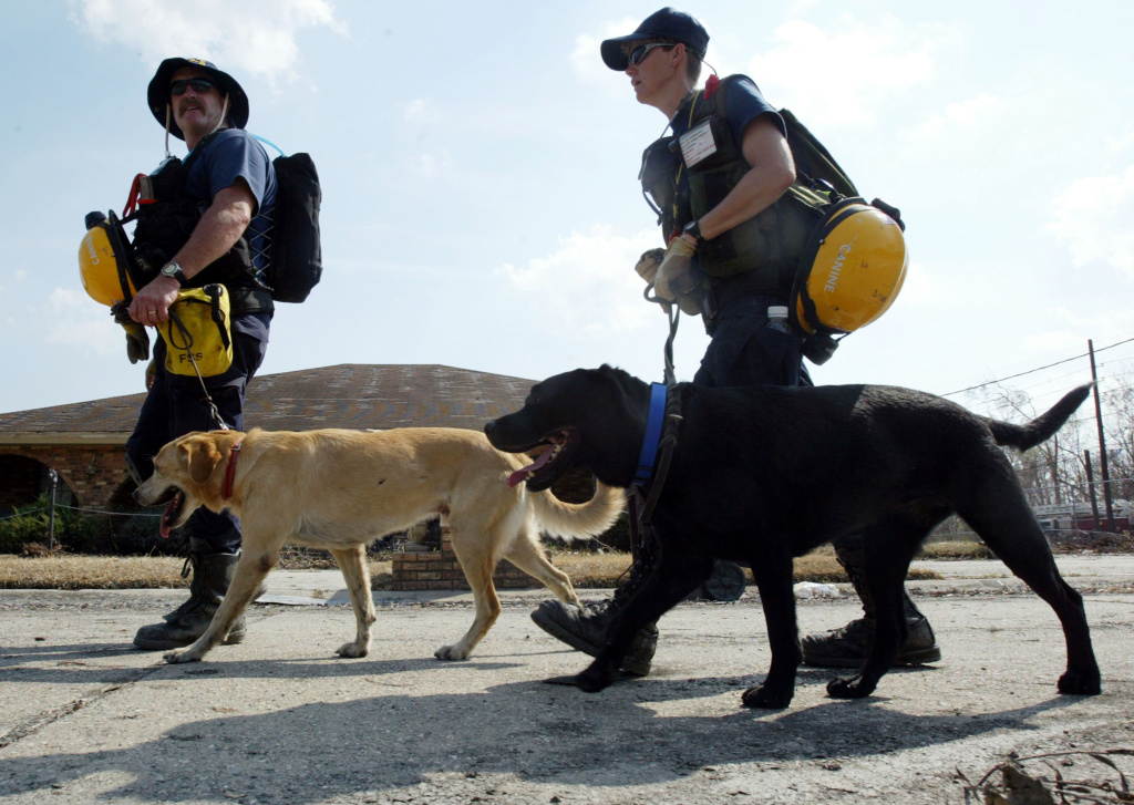 Orange County California Task Force 5 is aiding in the rescue efforts in Houston, Texas due to Hurricane Harvey. In this photo, rescue crews with dogs from Task Force 5 search house to house for people after Hurricane Katrina on September 9, 2005 in Braithwaite, Louisiana.