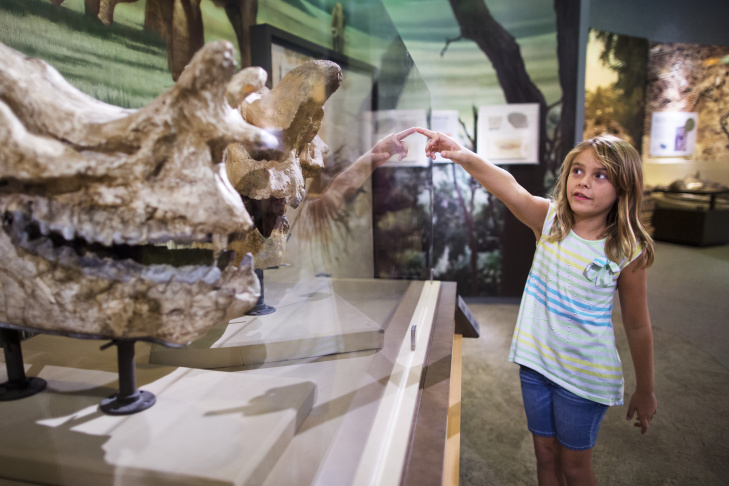 Paige Harding, 7, looks at Brontothere skulls at the Raymond M. Alf Museum of Paleontology on the campus of the Webb Schools in Claremont, Calif. on Thursday, Sept. 3, 2015.