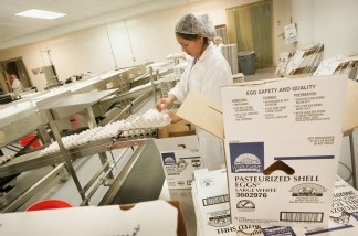 Rosa Antonez packages pasteurized eggs at the National Pasteurized Eggs (NPE) processing facility in Lansing, Illinois. The pasteurization process destroys viruses including Avian Influenza, also known as bird flu, and harmful bacteria including salmonella.