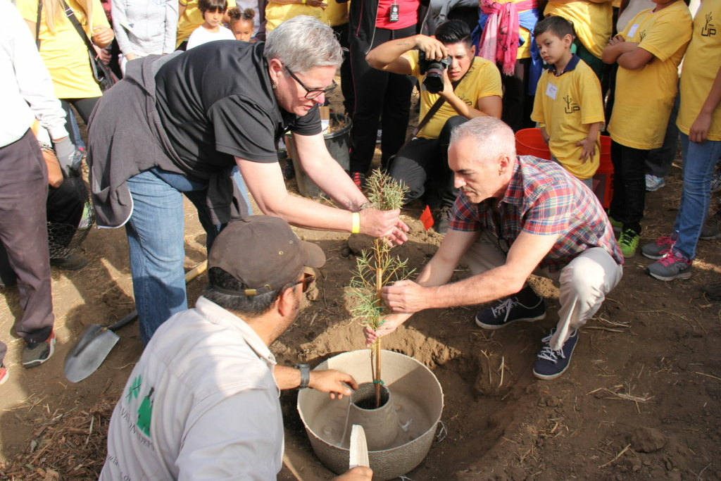 """Councilman Mitch O'Farrell (R) helps plant a tree in Elysian Park using a Land Life Company """"cocoon,"""" a new technology the city is testing to see if it can improve the survival rate of new trees."""