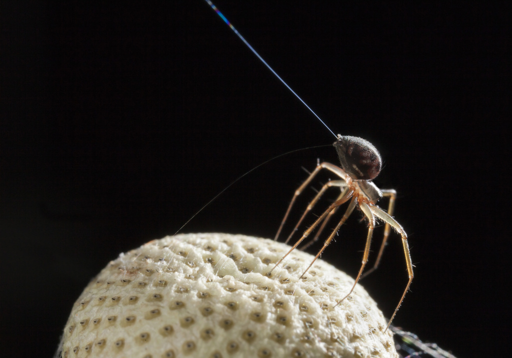 Spiders can fly long distances by releasing long strands of silk, which get picked up by the wind.