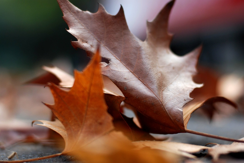 File photo of leaves on a street.