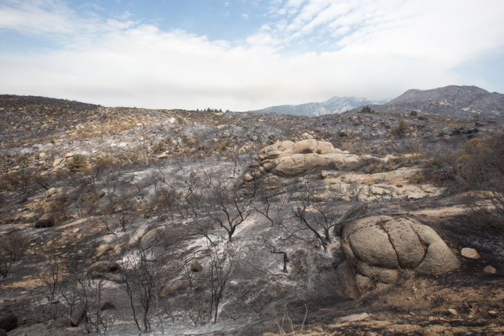 Trees and brush burned by the Mountain Fire.