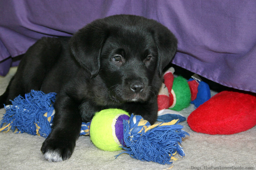This puppy is not Mack -- but looks a little like him.
