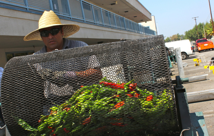 The smoky smell of roasting chilies fills the air at La Puente High School. Given longer to grow, the green chilies turn red like those in the photo.