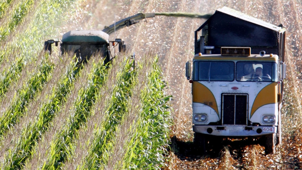 A harvester works through a field of corn near Santa Rosa, Calif. This corn has been genetically modified, and contains bacterial genes that kill certain insects, but the genes have become less effective.