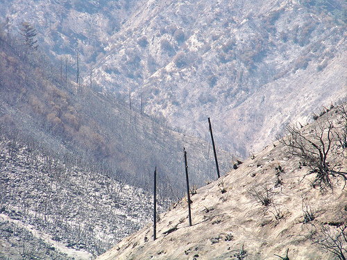 The Station Fire burned nearly 250 square miles.  Now, the burned land must recover.