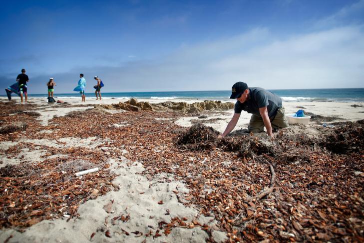 Malibu Beach Isopods - 3