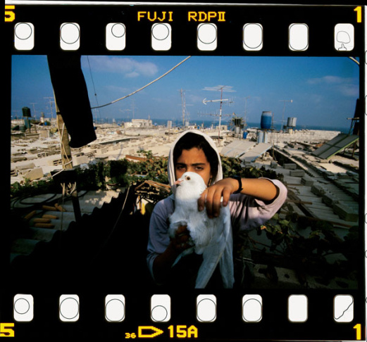 Fatima al-Abed stands on the roof of her home with one of her doves in the Shati refugee camp, Gaza,1994.