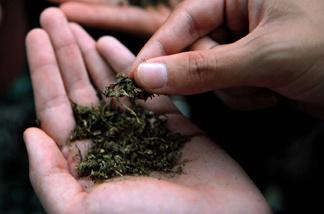 Men hold marijuana